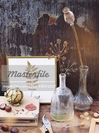 Still life with dry plants Stock Photo - Premium Royalty-Free, Image code: 6102-08001027