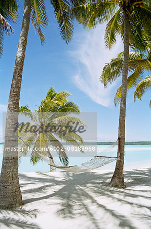 Palm trees with hammock on sandy beach Stock Photo - Premium Royalty-Free, Image code: 6102-08183968