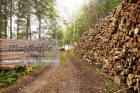 Logs along dirt track Stock Photo - Premium Royalty-Free, Image code: 6102-08642037