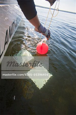 Scientist pulling up a buoy attached to an algae sample Stock Photo - Premium Royalty-Free, Image code: 6105-05396406