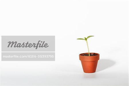 Seedling growing from plant pot Stock Photo - Premium Royalty-Free, Image code: 6106-05393795