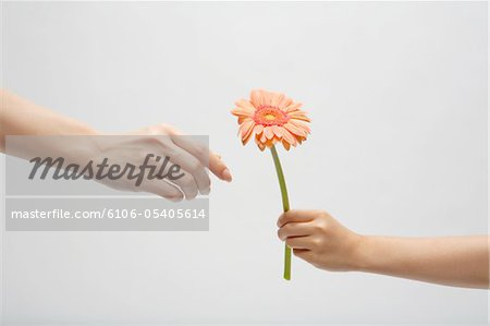Hand of child who passes mother flower Stock Photo - Premium Royalty-Free, Image code: 6106-05405614