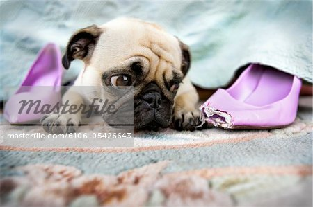 Bad Shoe Stock Photo - Premium Royalty-Free, Image code: 6106-05426643