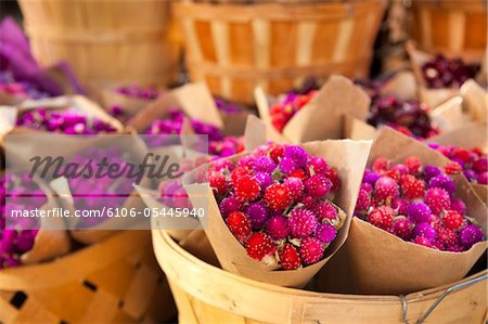 Variety of Holiday Flowers in Wooden Baskets Stock Photo - Premium Royalty-Free, Image code: 6106-05445940