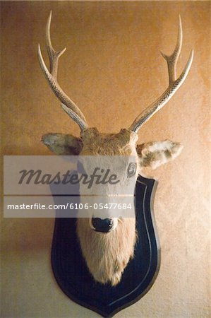 Stuffed deer head hanging on wall Stock Photo - Premium Royalty-Free, Image code: 6106-05477684