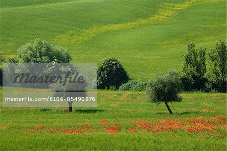 tuscany 2008 Stock Photo - Premium Royalty-Free, Image code: 6106-05490976