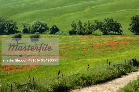 tuscany 2008 Stock Photo - Premium Royalty-Free, Image code: 6106-05490977