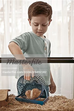 Little boy caring for his hamster Stock Photo - Premium Royalty-Free, Image code: 6106-05492182