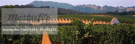 Rows of grapevines with small building Stock Photo - Premium Royalty-Free, Image code: 6106-05493261