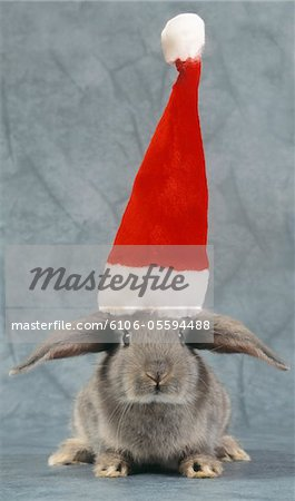 Grey Rabbit Wearing a Santa Hat Stock Photo - Premium Royalty-Free, Image code: 6106-05594488