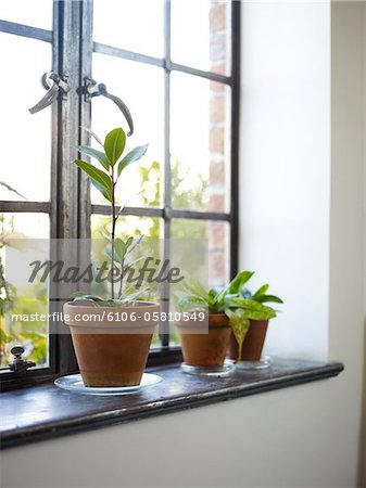 Plants on windowsill Stock Photo - Premium Royalty-Free, Image code: 6106-05810549
