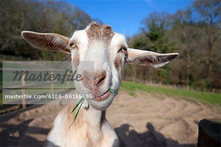 [Image: 6106-06165695em-funny-farm-animals.jpg]