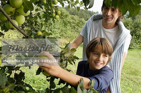 father and son picking apples off tree Stock Photo - Premium Royalty-Free, Image code: 6106-06311342