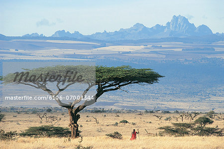 Maasai Warrior Standing Under Acacia Tortilis Tree, Looking at View of Mt Kenya Across Laikipia Plain, Kenya Stock Photo - Premium Royalty-Free, Image code: 6106-07001344