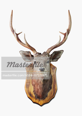 Deer Trophy Stock Photo - Premium Royalty-Free, Image code: 6106-07121571