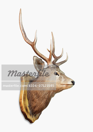 Deer Trophy Stock Photo - Premium Royalty-Free, Image code: 6106-07121585