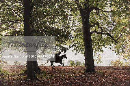 Horse and rider gallop through woodland Stock Photo - Premium Royalty-Free, Image code: 6106-07350349