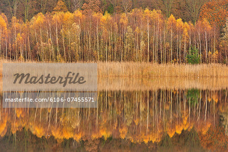 Mirror lake in autumn Stock Photo - Premium Royalty-Free, Image code: 6106-07455571