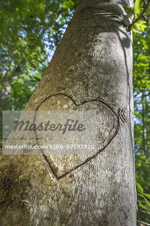 Heart carved in tree Stock Photo - Premium Royalty-Free, Image code: 6106-07593920