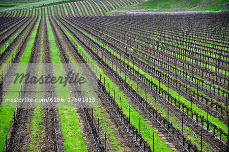 Endless vineyards Stock Photo - Premium Royalty-Free, Image code: 6106-07601813