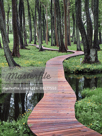walking bridge in forest Stock Photo - Premium Royalty-Free, Image code: 6106-08277550