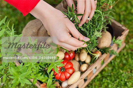 High angle view of a woman's hand putting vegetables in a crate Stock Photo - Premium Royalty-Free, Image code: 6108-06166699