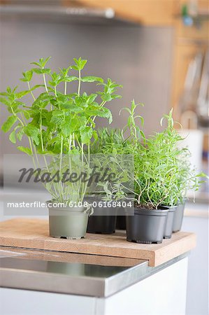 Assorted herbal plants Stock Photo - Premium Royalty-Free, Image code: 6108-06168404