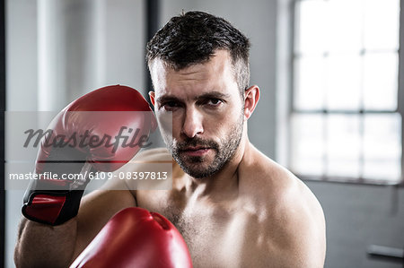 Fit man boxing with gloves Stock Photo - Premium Royalty-Free, Image code: 6109-08397813