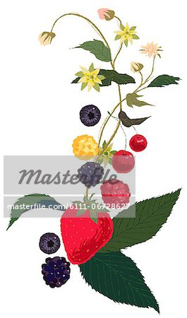 Berries Plant Stock Photo - Premium Royalty-Free, Image code: 6111-06728627