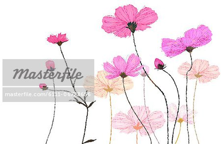 Flower Plant On White Background Stock Photo - Premium Royalty-Free, Image code: 6111-06728656