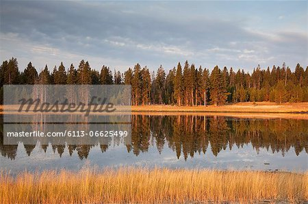 Trees reflected in still lake Stock Photo - Premium Royalty-Free, Image code: 6113-06625499