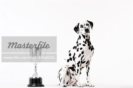 Dog sitting by trophy Stock Photo - Premium Royalty-Free, Image code: 6113-06626231