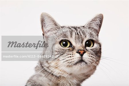 Close up of cat's face Stock Photo - Premium Royalty-Free, Image code: 6113-06626242