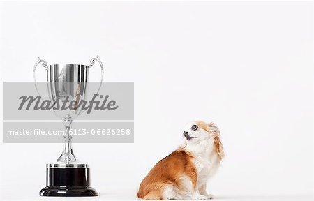 Dog looking at trophy Stock Photo - Premium Royalty-Free, Image code: 6113-06626258