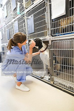 Vet putting dog in kennel Stock Photo - Premium Royalty-Free, Image code: 6113-06626422