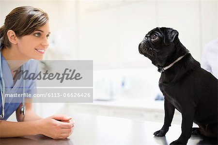 Veterinarian greeting dog in vet's surgery Stock Photo - Premium Royalty-Free, Image code: 6113-06626426