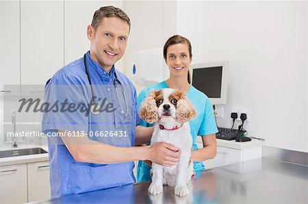 Veterinarians examining dog in vet's surgery Stock Photo - Premium Royalty-Free, Image code: 6113-06626431