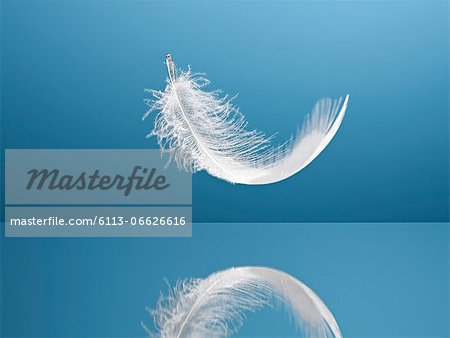 Feather floating over reflective surface Stock Photo - Premium Royalty-Free, Image code: 6113-06626616
