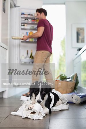 Dog chewing up toilet paper in kitchen Stock Photo - Premium Royalty-Free, Image code: 6113-06720941