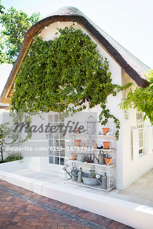 Ivy growing on wall in backyard Stock Photo - Premium Royalty-Free, Image code: 6113-06753923