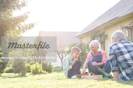 Grandparents and grandson eating harvested strawberries in sunny yard