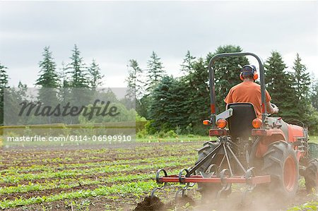 Field and farmer on tractor Stock Photo - Premium Royalty-Free, Image code: 6114-06599910