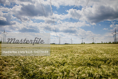 Wind farm, Dessau, Germany, Europe Stock Photo - Premium Royalty-Free, Image code: 6115-06778698