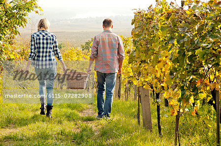 Grape harvest, young couple carrying basket, Slavonia, Croatia Stock Photo - Premium Royalty-Free, Image code: 6115-07282908