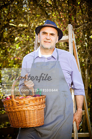 Senior man holding basket with apples, Munich, Bavaria, Germany Stock Photo - Premium Royalty-Free, Image code: 6115-08100644