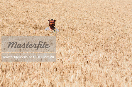 Wheat Fields In Washington. A Person Wearing A Bear Mask Looking Up Over The Ripe Crop. Stock Photo - Premium Royalty-Free, Image code: 6118-07122120