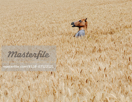 Wheat Fields In Washington. A Person Wearing A Horse Head Animal Mask Emerging Above The Ripe Corn. Stock Photo - Premium Royalty-Free, Image code: 6118-07122121