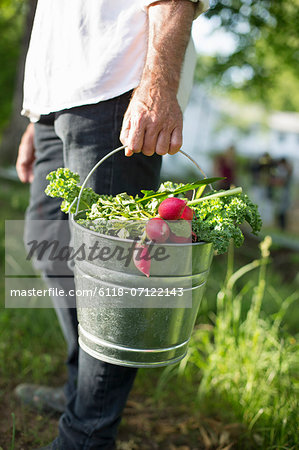 Organic Farm. Summer Party. A Man Carrying A Metal Pail Of Harvested Salad Leaves, Herbs And Vegetables. Stock Photo - Premium Royalty-Free, Image code: 6118-07122143