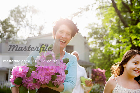 Family Party. A Woman Carrying A Large Bunch Of Rhododendron Flowers, Smiling Broadly. Stock Photo - Premium Royalty-Free, Image code: 6118-07122197
