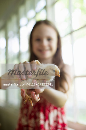 A Young Girl In A Floral Sundress, Holding A Young Chick Carefully In Her Hands. Stock Photo - Premium Royalty-Free, Image code: 6118-07122241